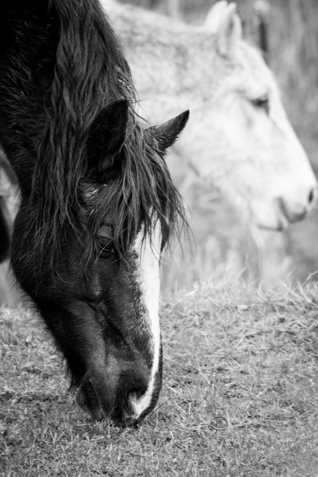 Ponies Black and White