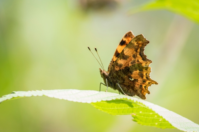 Comma on Guard